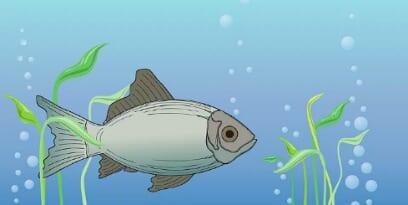বিদ্যুৎ প্রবাহ; লেকের মাছ ও বিদ্যুৎ প্রবাহের সামঞ্জস্যতা